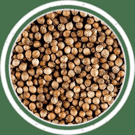 02-spices-semi-coriandolo